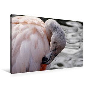 Premium Textil-Leinwand 90 cm x 60 cm quer Chile Flamingo