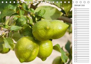 Emotionale Momente: Orangen und Zitronen. (Tischkalender 2020 DI