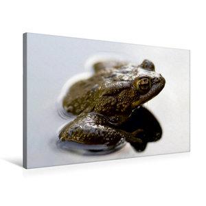 Premium Textil-Leinwand 75 cm x 50 cm quer Frosch