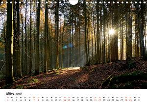 Meine schönsten Wanderwege (Wandkalender 2020 DIN A4 quer)
