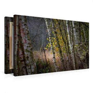 Premium Textil-Leinwand 75 cm x 50 cm quer Pennigbüttler Moor -