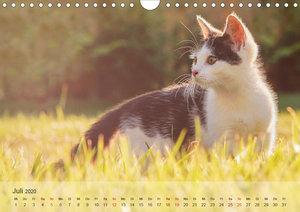Katzen 2020 Bezaubernde Samtpfoten