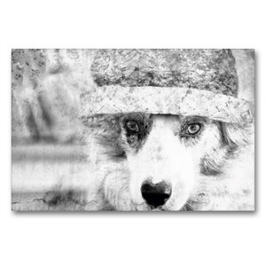 Premium Textil-Leinwand 90 cm x 60 cm quer Border Collie Bild au