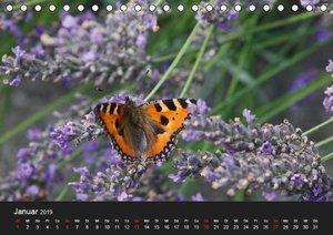 Gartenbesucher (Tischkalender 2019 DIN A5 quer)