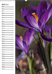 Lichtfänger (Wandkalender 2019 DIN A2 hoch)