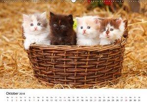 Mit Katzenkindern durch das Jahr