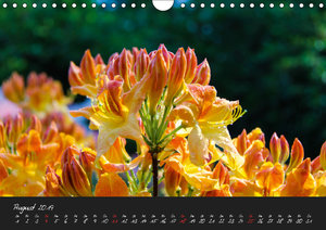 Butchart Gardens 2019 (Wandkalender 2019 DIN A4 quer)