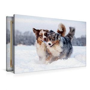 Premium Textil-Leinwand 90 cm x 60 cm quer Australian Shepherds