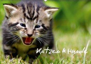 Katzen & Hunde (Wandkalender 2016 DIN A2 quer)