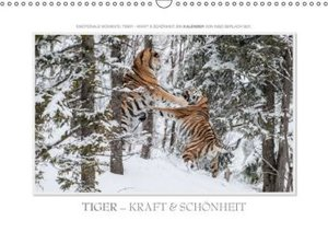 Emotionale Momente: Tiger - Kraft & Schönheit. (Wandkalender 201