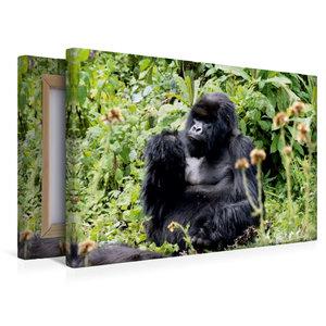 Premium Textil-Leinwand 45 cm x 30 cm quer Berggorilla, Ruanda
