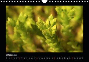Faszination Pflanzenwelt - Sedum (Wandkalender 2019 DIN A4 quer)