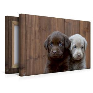 Premium Textil-Leinwand 45 cm x 30 cm quer Labrador Geschwister