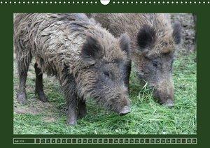 Schweinkram - Die Wildschweine sind los