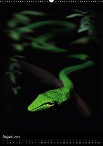 Schlangen im Lichtfenster des Dschungels