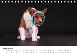 Allerliebste Basenji Welpen 2020 (Tischkalender 2020 DIN A5 quer