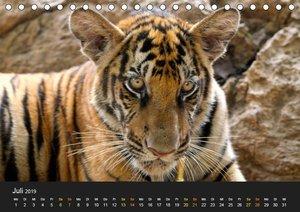 Tierisches Thailand (Tischkalender 2019 DIN A5 quer)