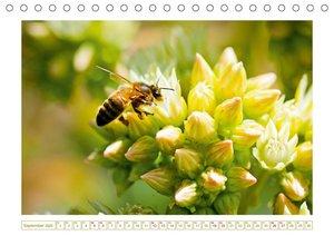 Bienen auf Sammeltour
