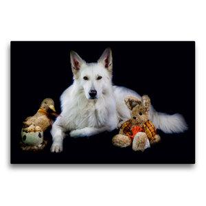 Premium Textil-Leinwand 75 cm x 50 cm quer Weißer Schäferhund