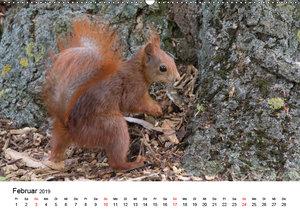 Guck mal, ein Eichhörnchen! (Wandkalender 2019 DIN A2 quer)