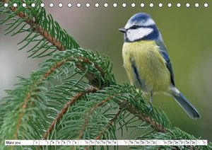 Heimische Gartenvögel (Tischkalender 2019 DIN A5 quer)