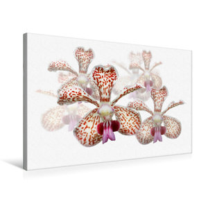 Premium Textil-Leinwand 75 cm x 50 cm quer Vanda besonii Orchide