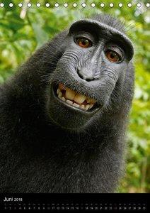 Selfies. Tierische Selbstportraits