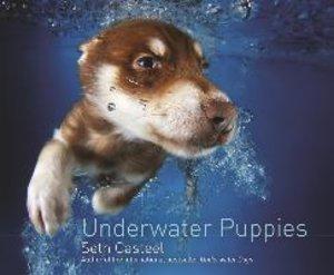 Underwater Puppies