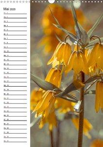 Blütentraum in Orange