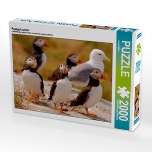 Papageitaucher 2000 Teile Puzzle quer