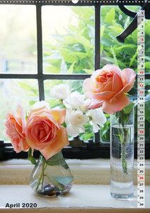 Schönste Rosen