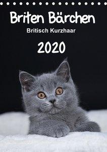 Briten Bärchen ? Britisch Kurzhaar 2020