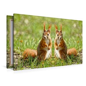 Premium Textil-Leinwand 120 cm x 80 cm quer Eichhörnchen Zwillin