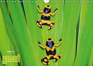Frösche: Hübsche Hupfer (Wandkalender 2016 DIN A4 quer)
