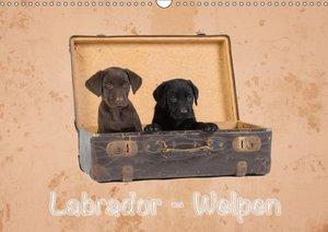 Labrador - Welpen (Wandkalender 2019 DIN A3 quer)