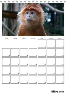 Der affige Terminplaner (Tischkalender 2019 DIN A5 hoch)