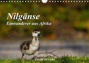 Nilgänse - Einwanderer aus Afrika