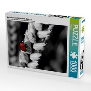 Marienkäfer im Weizenfeld, Colorkey 1000 Teile Puzzle quer