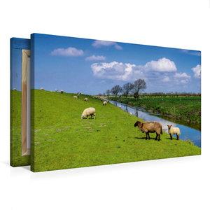 Premium Textil-Leinwand 75 cm x 50 cm quer Deichschafe