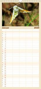 Insektenflug - Familienplaner hoch (Wandkalender 2020 , 21 cm x