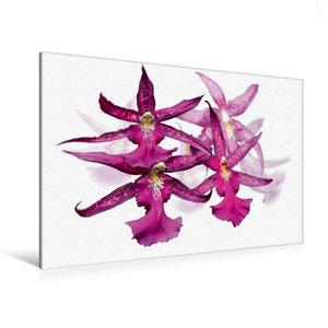 Premium Textil-Leinwand 120 cm x 80 cm quer Oncidium Orchideenri