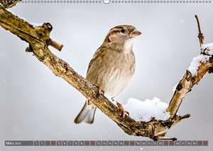 NATUR PUR Vertraute Singvögel