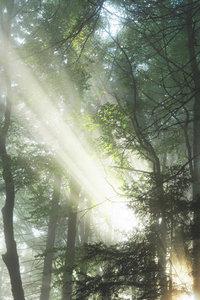 Premium Textil-Leinwand 60 cm x 90 cm hoch Zauberhafte Lichtspie