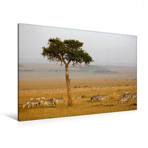 Premium Textil-Leinwand 120 cm x 80 cm quer Masai Mara NP, Kenia
