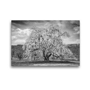 Premium Textil-Leinwand 45 cm x 30 cm quer Baumwunder