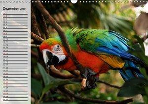 Papageien. Bunt, laut und klug (Wandkalender 2019 DIN A3 quer)