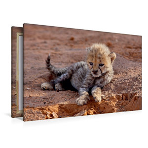 Premium Textil-Leinwand 120 cm x 80 cm quer Gepardenbaby
