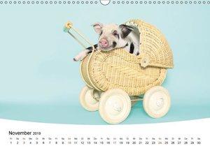 Niedliche Ferkel lovely piglets 2019