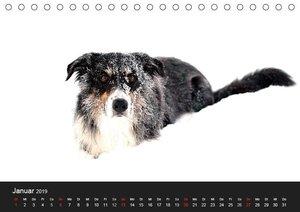 Border Collies (Tischkalender 2019 DIN A5 quer)
