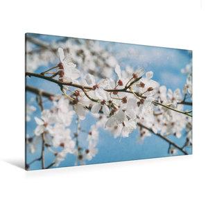 Premium Textil-Leinwand 120 cm x 80 cm quer Kirschblütenpracht